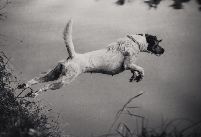Psi v akci