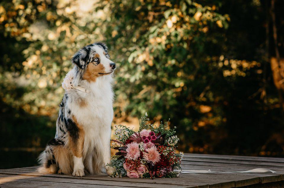 Zvířata na svatbách